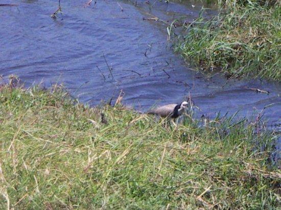 Kasane, Botswana: unusual avian