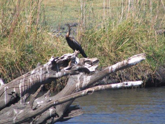 Kasane, Botswana: perched