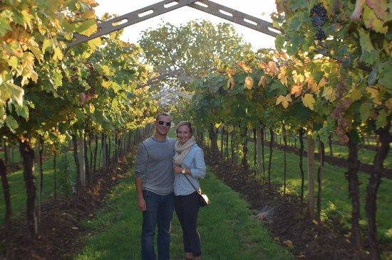 San Pietro in Cariano, Italia: Beautiful vineyards!