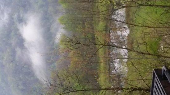 Gilbert, Virginia Occidental: 20170419_080919_large.jpg