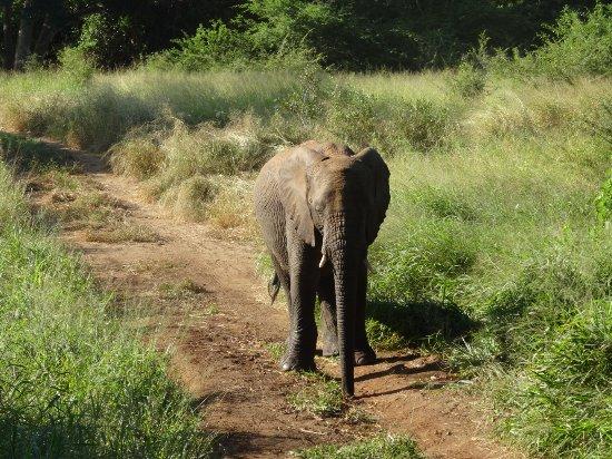 Hluhluwe, Sudáfrica: DSC01909_large.jpg