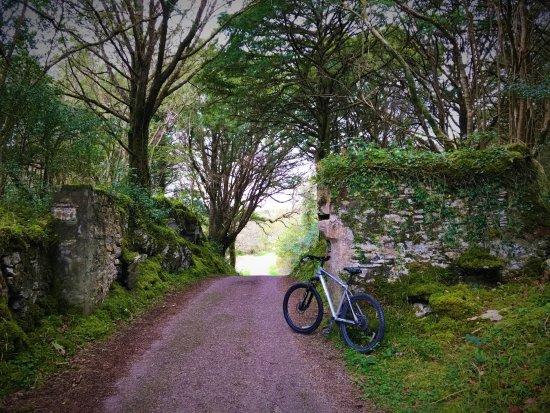 Greystones, Irlande : Killarney National Park