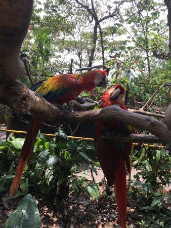 Refugio Herpetologico de Costa Rica: photo2.jpg
