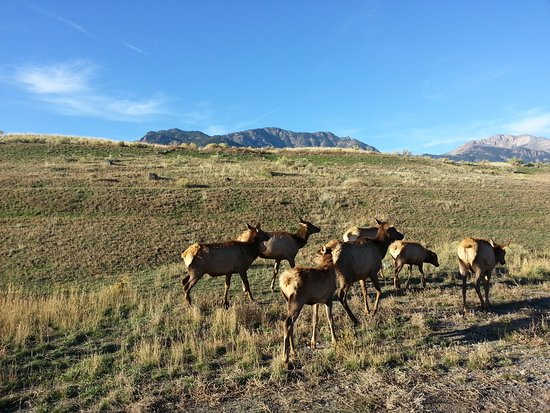 Yellowstone RV Park & Campground