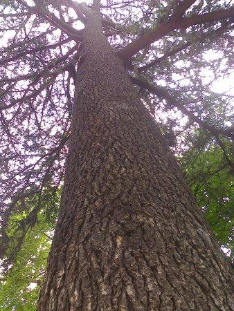 Jardin des serres d'Auteuil : Fier frère arbre