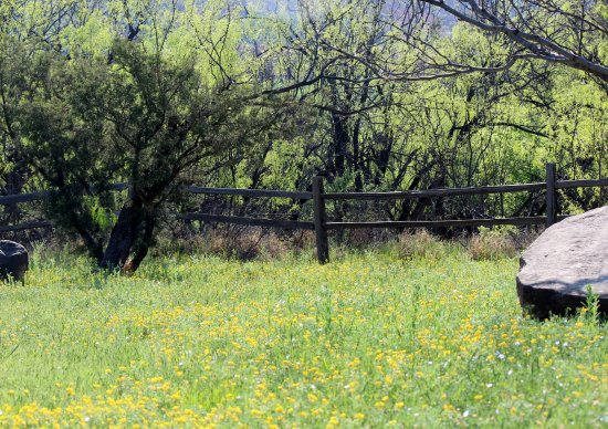 Palo Duro Canyon State Park: Wildflower meadow