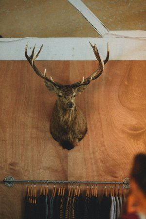 Vintage Industries: Taxidermy