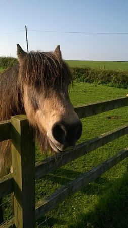 Brighstone, UK: Merlin the friendly horse