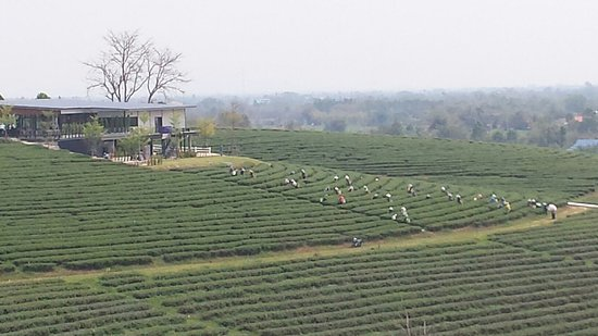 Mae Chan, Thailand: Choui Fong Tea Plantation - tea workers and gift shop