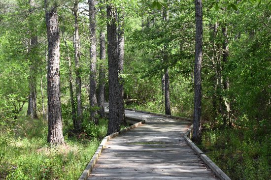 Kountze, TX: Sundew Trail