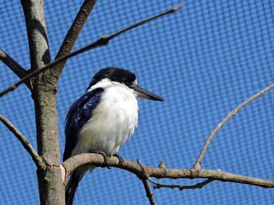 On The Perch Bird Park