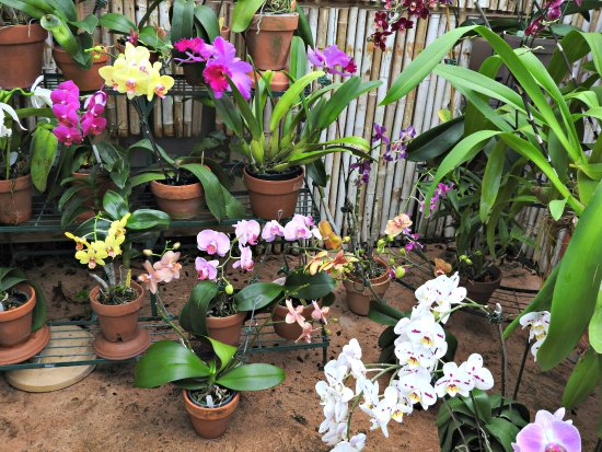 Orchids - Picture of New Orleans Botanical Gardens, New Orleans ...