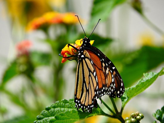 Butterfly Garden Bild Fr N New Orleans Botanical Gardens