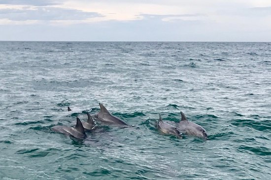 Penneshaw, Australia: photo0.jpg