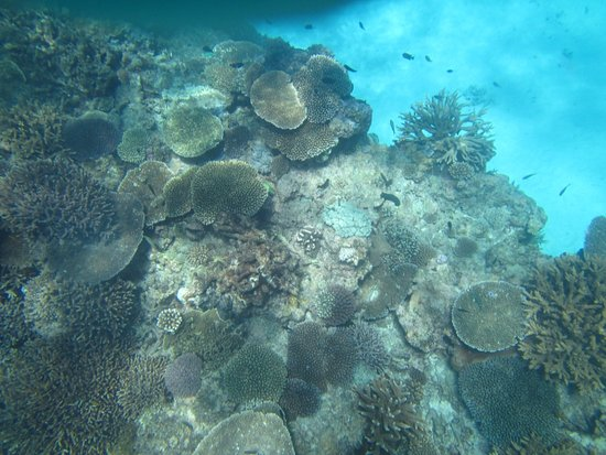 Lady Elliot Island, Australia: Reef with fish in the background