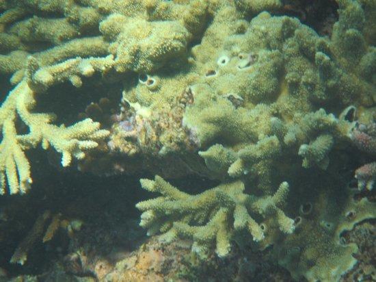 Lady Elliot Island, Australia: Close up of reef