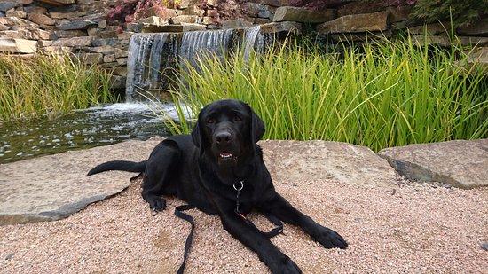 Oberon, أستراليا: Mayfield is dog friendly