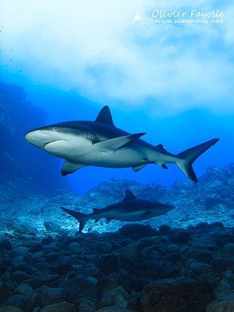 Cap Malheureux: Shark safari in Mauritius