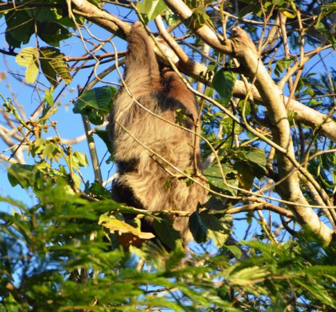 Julio Tours Nicaragua - Day Tours: Sloth