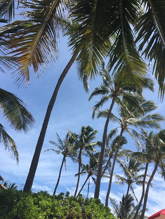 Poipu Beach Park: Nice line of trees for shade.