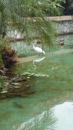 Iberostar Varadero: Wildlife