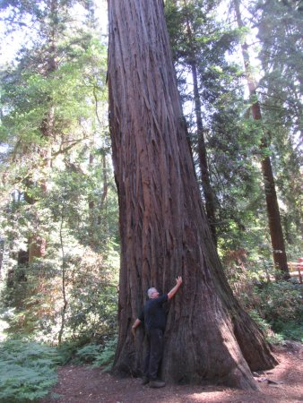 Lagunitas, CA: Great Theraphy ... Hug a Tree ...