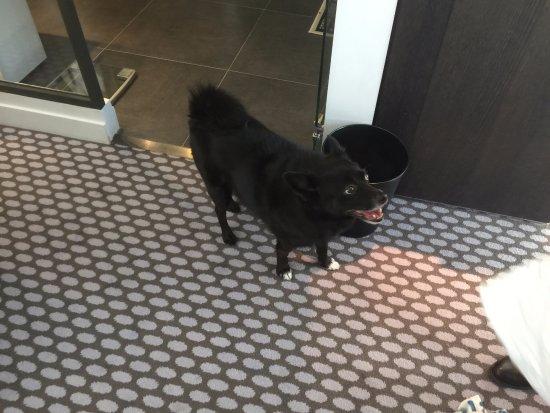 Courbevoie, Francia: auch dem Hund hat es gefallen