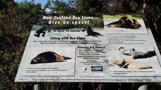 Southland Region, Neuseeland: Sealion info sign