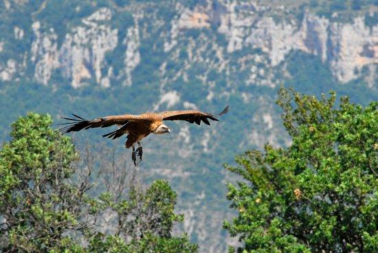 Restaurant Family : vautour