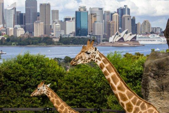 Walking Food Tours Sydney