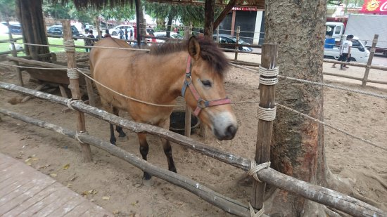 Kandawgyi Park : there are also few animals