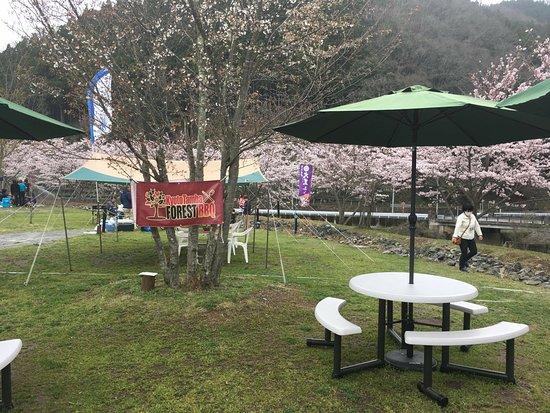 Nantan, Japan: Cherry blossoms at Springs Hyoshi