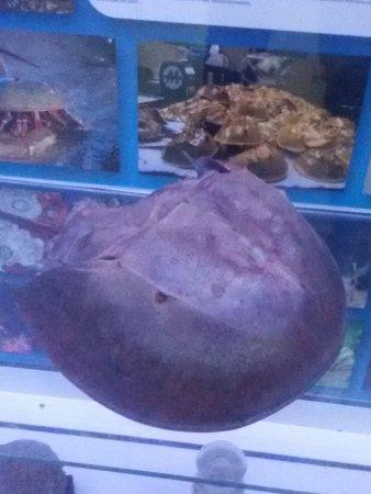 The Aquarium and the Black Sea Museum: IMG-20170418-WA0043_large.jpg