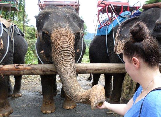 Phangnga, Tajlandia: He likes bananas