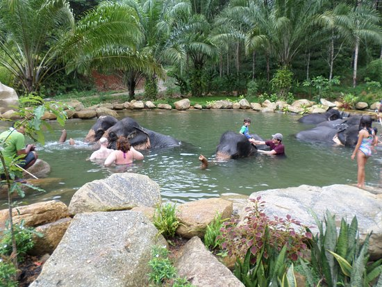 Lets swim with the elephants - Picture of Phang Nga ...