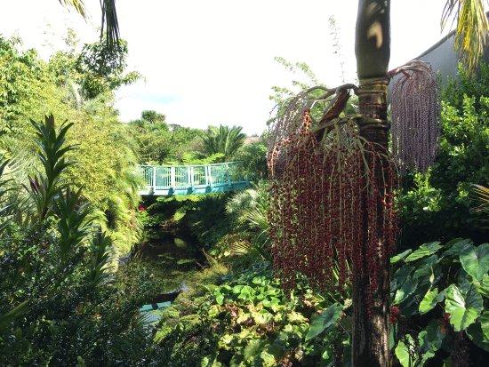 Hamilton Gardens: photo0.jpg