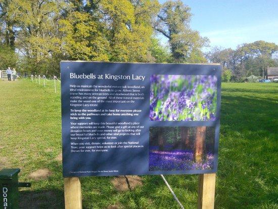 Wimborne Minster, UK: Bluebells in April