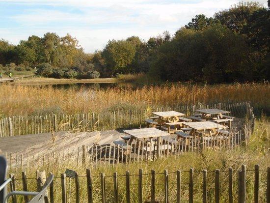 Flemish Visitors and Nature Education Centre: Het terras van de cafetaria De Nachtegaal