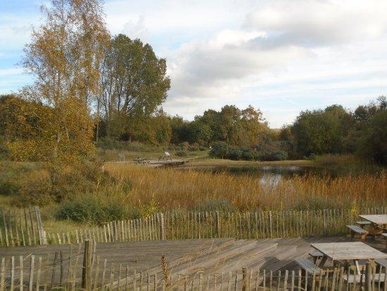 Flemish Visitors and Nature Education Centre: Zicht op de vijver nabij het natuurgebied