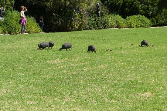 Kirstenbosch National Botanical Garden: Enjoying the grass.