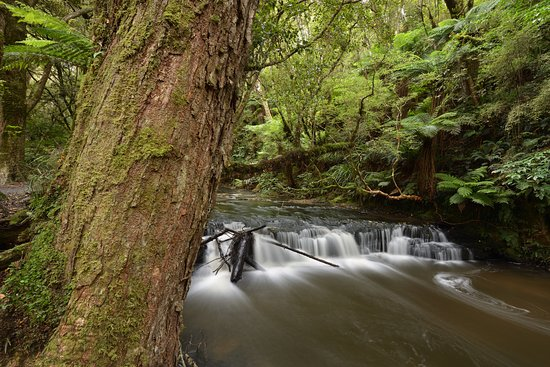 Owaka, New Zealand: The river that is visible on the way to the falls