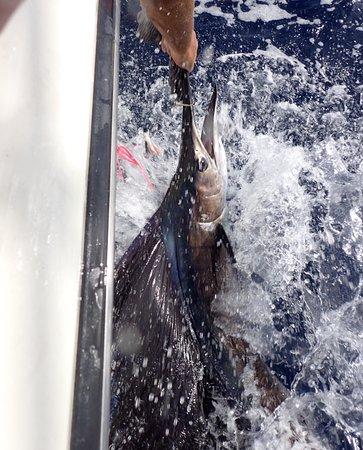 Kralendijk, Bonaire: Billfish and more you can catch it in Bonaire