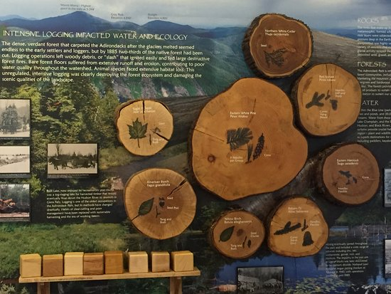 Adirondack Interpretive Center: Woods cut and exhibited