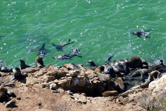 Plettenberg Bay, Sudáfrica: Swimming and basking...