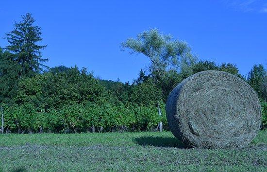 Mantry, village aux AOP Comté, Morbier et vins du Jura