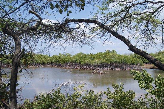 Bani, Den dominikanske republikk: Bosque de Manglares.