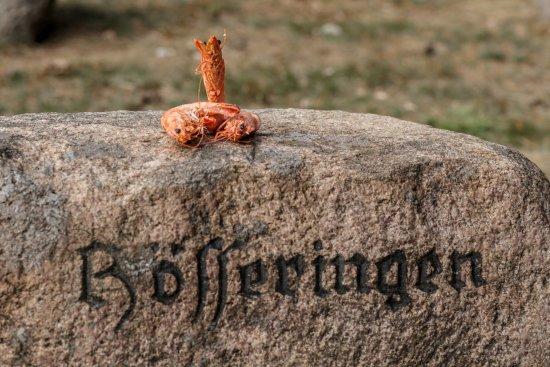 Suderburg, Tyskland: mitten in der Natur im Wald in Hösseringen - auch das Mee(h)r wird hier im Juli groß geschrieben