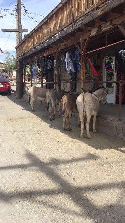 Canoas, RS: photo3.jpg