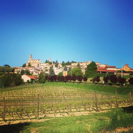 Vignale Monferrato, Italia: Area
