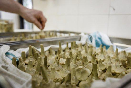 Montemerano, İtalya: in preparazione la carciofina